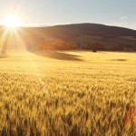 Land Issues: Developing the Amber Waves of Grain